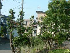 090706_sawara_02.jpg